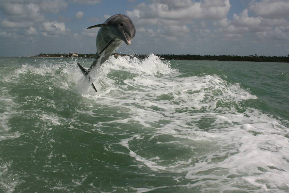 Cruises In Naples Fl Sightseeing Dolphin Watching Sunsets