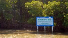 Rookery Bay